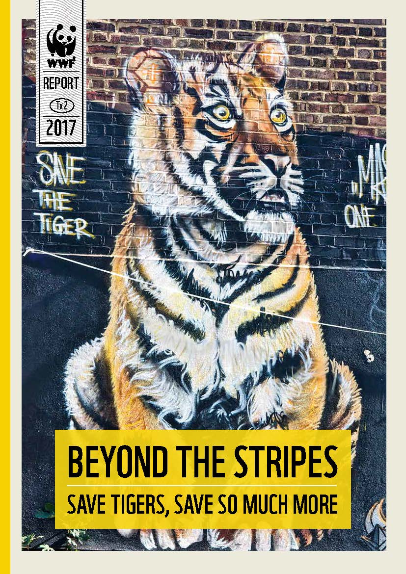 Beyond the Stripes:Save Tigers, Save So Much More